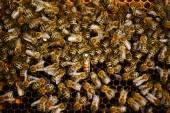 Un enjambre de abejas en la miel del apiario — Foto de Stock