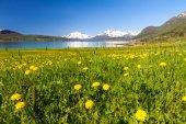 Paradise beach i lofoten — Stockfoto