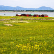 Norwegian traditional boathouse in countryside — Stock Photo #53672253