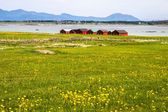 Norwegian traditional boathouse in countryside — Stock Photo