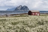 Vaeroy island, Lofoten island,Norway — Stock Photo