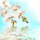 Schöne weiße orchidee — Stockfoto