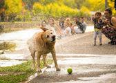 Wet dog shaking the water — Stock Photo