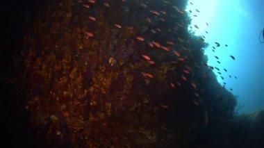 Méditerranée underwater — Stock Video