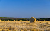 Round hay bales in a newly mowed field — Stock Photo