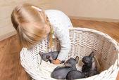 Blond Girl Holding Sphynx Kittens in a Basket — Stock Photo