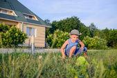 小さな男の子のネットで虫をキャッチ — ストック写真