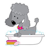 Cute grey poodle — Stock Vector