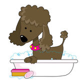 Cute brown poodle — Stock Vector