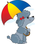 Poodle in Rain — Stock Vector