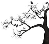 Crow Tree — Stock Photo