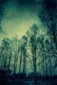 Grunge Winter Park — Stock Photo