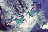 Striped Cat in Eyeglasses — Zdjęcie stockowe