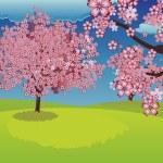 ������, ������: Blooming Sakura Tree on Lawn