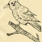 Crow Sketch — Stock Photo #71314321