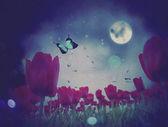Night Tulips — Stock Photo