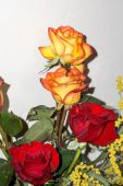 Red and Orange Roses Bouquet — Stock Photo