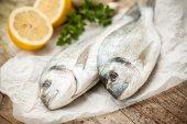 Gilt-head sea bream fish  — Stock Photo