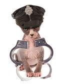 Stripper kitten — Stock Photo