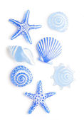 Blue sea shells — Stock Photo