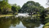 Widok z zielonych drzew w parku — Zdjęcie stockowe