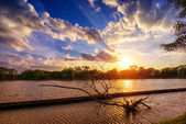 Sunset at national lake park with silhouette dry tree on foregro — Stock Photo