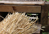 Bunch of wheat stalks with the old machine to collect seeds — Stock Photo