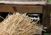 Bunch of wheat stalks with the old machine to collect seeds — Stockfoto