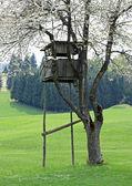 Pabellón de caza en las montañas construido encima de un árbol — Foto de Stock