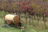 Vineyard with the tanker during the dry season — Stock Photo