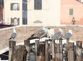 Seagulls over the poles to anchor boats in the canal — Stockfoto