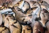Bream caught fresh in the Mediterranean Sea at the fish market — Stock Photo