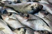 Bream caught fresh in the Mediterranean Sea — Stock Photo