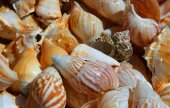 Sea shells collected in the ocean — Stock Photo