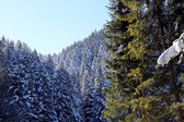 Mountain landscape with snow and trees in winter — ストック写真