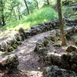 Path of stones in the middle of the Woods with many tree — Stock Photo #76268961