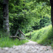 Long path of stones in the middle of the Woods in the mountains — Stock Photo #76268567