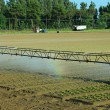 Automatic irrigation system in the field of lettuce — Stock Photo #78596756