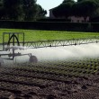 Automatic irrigation system in the field of lettuce — Stock Photo #78596954