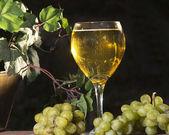 Vin mousseux — Photo