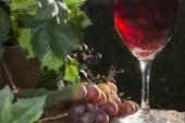 šumivé červené víno — Stock fotografie