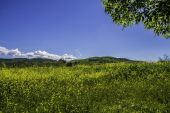 Cloud Sky and Meadow — Stock Photo