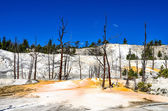 Landscape view of Angel terrace and dead trees in Yellowstone — Stock Photo