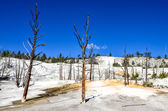 Landscape view of Angel terrace in Yellowstone NP — Stock Photo