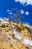 Scenic view of geothermal land and dry trees in Yellowstone NP — Stock Photo