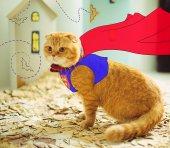 Supercat — Stock Photo