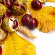 Chestnut nut and leaves — Stock Photo #52846445