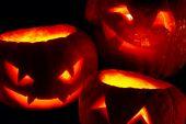 Calabazas de Halloween — Foto de Stock