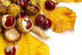 Chestnut nut and leaves — Stock Photo