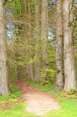 Tree alley  footpath — Stock Photo
